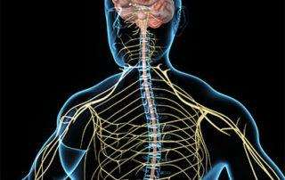 medical illustration of person and nervous system